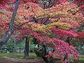Kingiardino l'autunno colorato.jpg