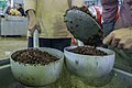 Kitchens in Iran-Mehran City آشپزخانه مرکزی شهر مهران در ایام اربعین، عکاس، مصطفی معراجی 48.jpg