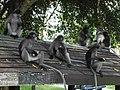 Ko Lak, Mueang Prachuap Khiri Khan District, Prachuap Khiri Khan, Thailand - panoramio (1).jpg