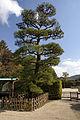 Korakuen Okayama03s3872.jpg