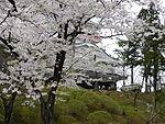 Kubota-jo Sakura.JPG