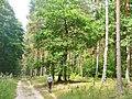 Kunersdorfer Forst - Wanderweg (Footpath) - geo.hlipp.de - 39330.jpg