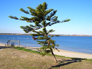 Kyeemagh - Image: Kyeemagh Beach 2
