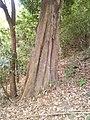 LINDO TRONCO - panoramio.jpg