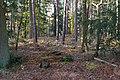 LSG Forst Rundshorn am Würmseeweg IMG 2041.jpg