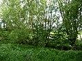 LSG OS 00021 Brennenheide 18.jpg