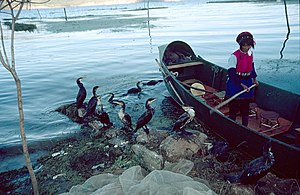 Erhai Lake - A cormorant fisherwoman returning to shore on Erhai Lake