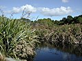 Lake in Nga Manu Nature Reserve.jpg