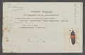 Lamprinus - Print - Iconographia Zoologica - Special Collections University of Amsterdam - UBAINV0274 014 13 0024.tif
