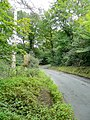 Lane in woodland - geograph.org.uk - 1411625.jpg