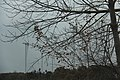 Laurel Mountain Summit - panoramio (39).jpg