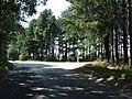 Leafy Lane - geograph.org.uk - 1445148.jpg