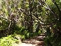 Levada 25 Fontes, Madeira, Portugal, June-July 2011 - panoramio (4).jpg