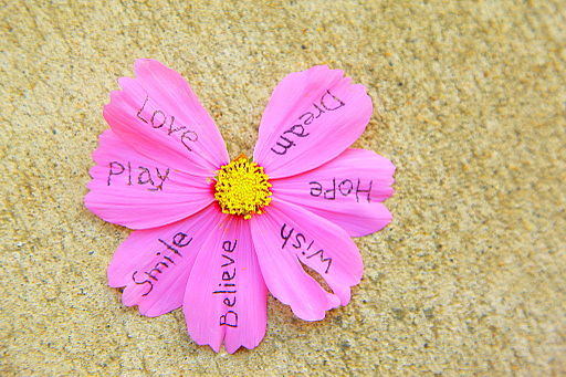 Life's Options written on flower petals