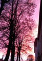 Life is pink!.png