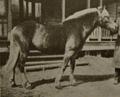 Liinaharja 1910.png