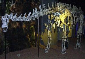 Rebbachisauridae - Limaysaurus tessonei skeleton restoration