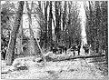Limburger Koerier vol 090 no 042 Een boom van de Kapellerlaan in Roermond werd door de kracht van den storm geveld en ontwrichtte het verkeer langs dezen drukken weg.jpg