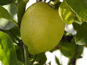 Limonu