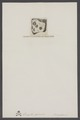 Lingula prima - - Print - Iconographia Zoologica - Special Collections University of Amsterdam - UBAINV0274 005 13 0028.tif