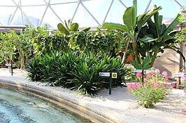Planten langs de vaargeul in het Tropics Greenhouse
