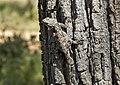 Lizard camouflage tree.jpg