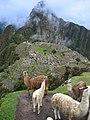 Llamas en Machu Picchu - 10.jpg