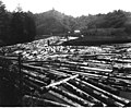 Logs in boom below mill at Toledo, Oregon, along line of U S Army Signal Corps, Spruce Production Division Railroad, June 20 (CURTIS 523).jpeg