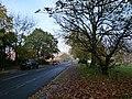 London, Plumstead-Shooters Hill, Plum Lane & Shrewsbury Park 11.jpg
