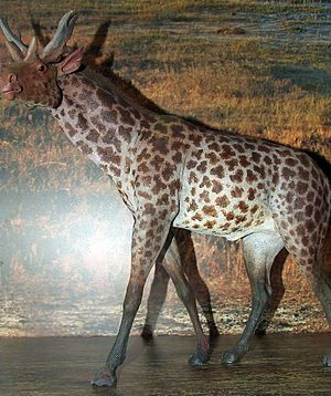 Museum of Evolution of Polish Academy of Sciences - Sivatherium reconstruction