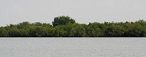 Godavari-Krishna mangroves - Mangroves in Krishna Delta region