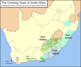 Map of Macrifoliae Aloes.png