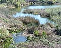 Marsh near Blue Ravine, Folsom, CA - panoramio.jpg