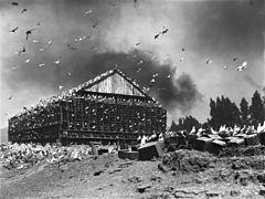 Massive bird coop covered in pigeons on a pigeon ranch on the Los Angeles River, ca.1900 (CHS-1496).jpg