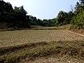 Mawlaik, Myanmar (Burma) - panoramio (9).jpg