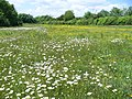 Meadow on Top of The Hog's Back - geograph.org.uk - 453683.jpg