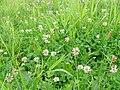 Meadows in Poland Popowo Parcele (6).JPG