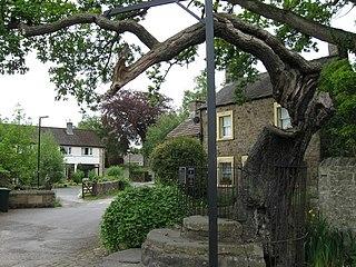 Caton Oak Tree in England