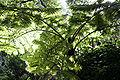 Melb botanical gardens08.jpg