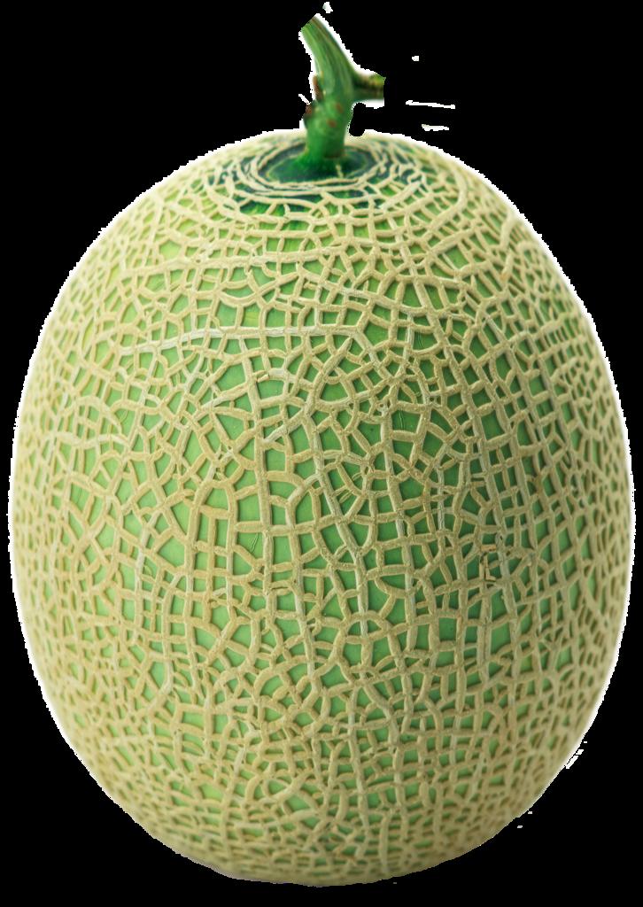 cantaloupe description Description the melon (cucumis melo), is an annual, viny plant of the cucurbitaceae family the most important cultivated groups are cantaloupe, muskmelon.