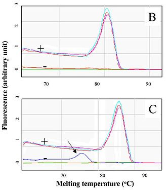 Real-time polymerase chain reaction - Distinct fusion curves for a number of PCR products (showing distinct colours). Amplification reactions can be seen for a specific product (pink, blue) and others with a negative result (green, orange). The fusion peak indicated with an arrow shows the peak caused by primer dimers, which is different from the expected amplification product.