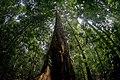 Menjulang Taman Nasional Bukit Duabelas.jpg