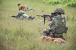 Military Working Dogs undergo Live Fire Tactical Training. MOD 45160279.jpg