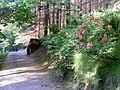 Millbuies Country Park - geograph.org.uk - 1346407.jpg