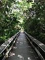 Mohogany Trail Everglades - panoramio.jpg