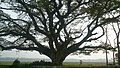 Monster Tree.jpg