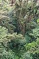 Monteverde Cloud Forest 02.jpg