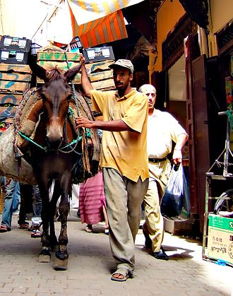 Souq - Mule moving goods around in the car-free Medina quarter, Fes, Morocco