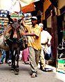 Morocco Fes Camel.jpg