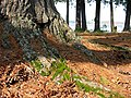 Moss on tree.jpg